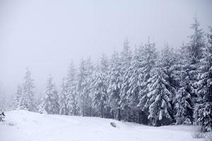 Snow-and-Fog